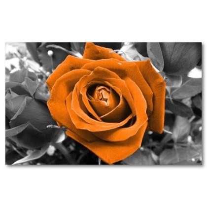 Αφίσα (φύση, λουλούδια, πορτοκάλι, μαύρο, λευκό, άσπρο)